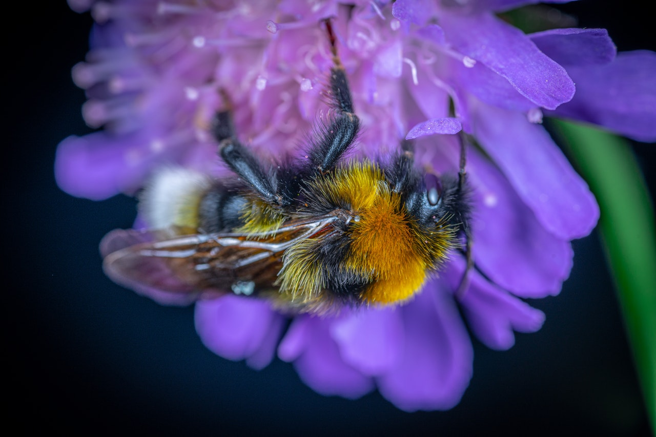 Bee pollinating on flower.