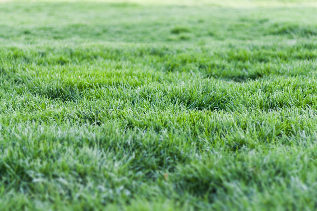 Green grass in yard; liming your lawn.